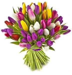 משלוחי פרחים בהוד השרון וחנות פרחים בהוד השרון