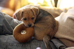 צעצועים לגורים