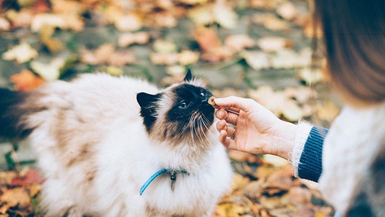 בווי קט מזון לחתולים