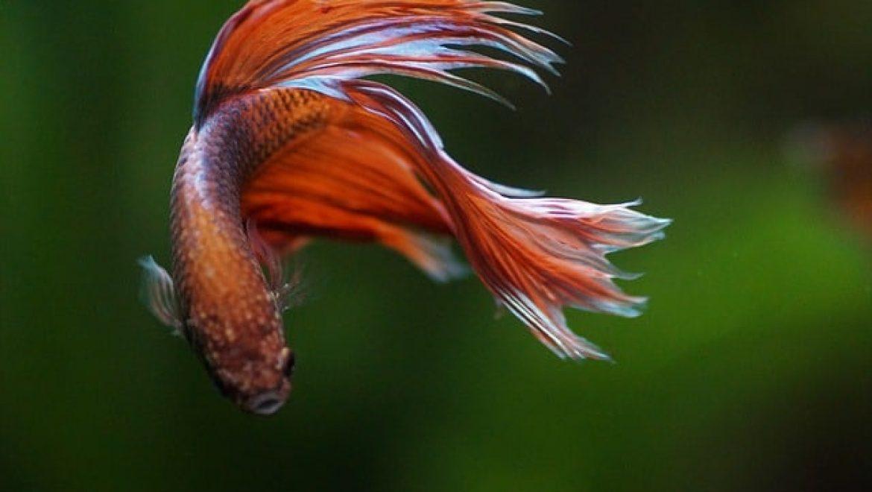 המדריך המלא לבחירת אוכל בריא לדגים שלכם