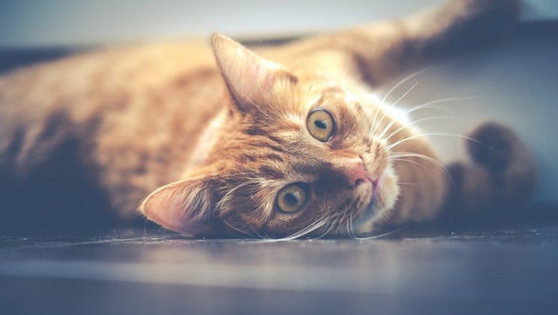 איך להרגיל חתול וותיק לחתול חדש