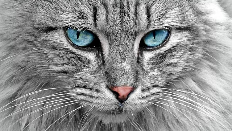 מוצרי הדברה לחתולים