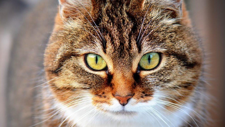 ציוד לחתולים – מה אנחנו צריכים בשבילם