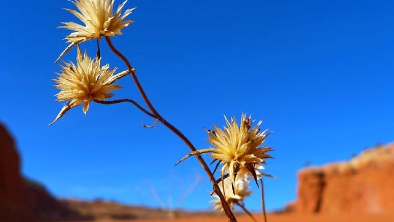צימר במדבר – חופשה אחרת מומלצת