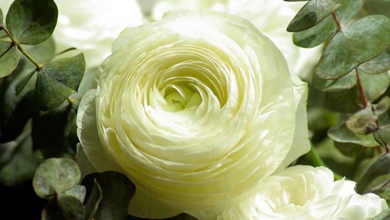 פרחים בחולון / פרחים בבת ים