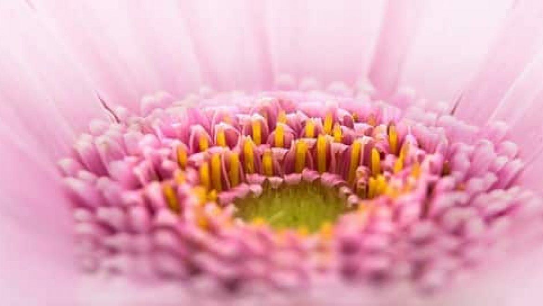 שרשראות פרחים