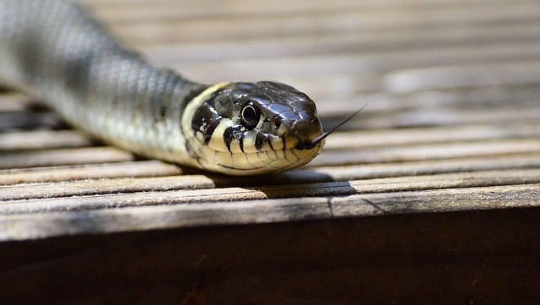 החשיבות של ניקיון בעונת הנחשים