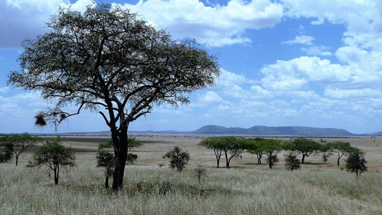 ספארי בטנזניה – למה זה כדאי?