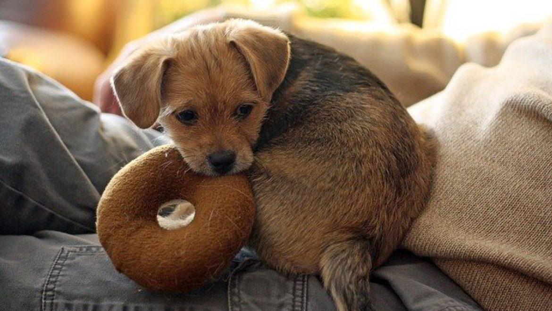 צעצועים לגורים: איך לשחק איתם נכון?