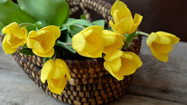 פרחים לשיפור מצב הרוח