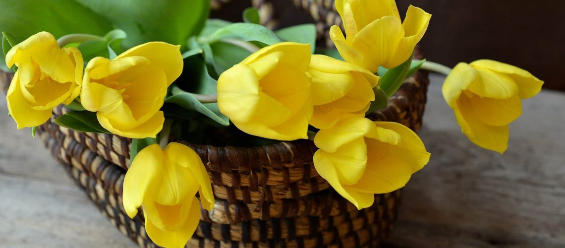 tulips-708410_1920